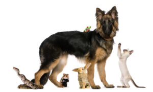 pet law vero beach florida